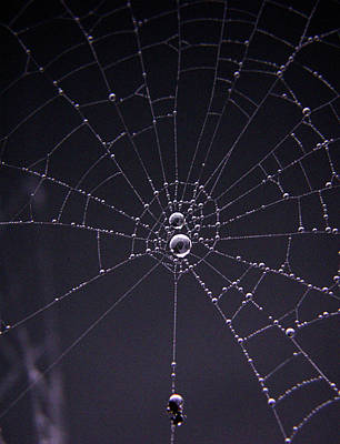Photograph - Itsy Bitsy Spider by Nancy Griswold
