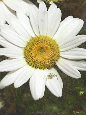 Photograph - Itsy Bitsy Spider by Teresa Wilson