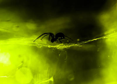 Bitsy Photograph - Itsy Bitsy Spider by Toma Kulaksazov