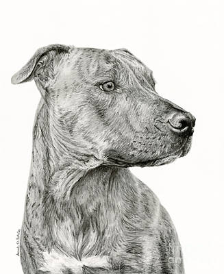 Pup Drawing - Ittie Bittie Pittie by Sarah Batalka