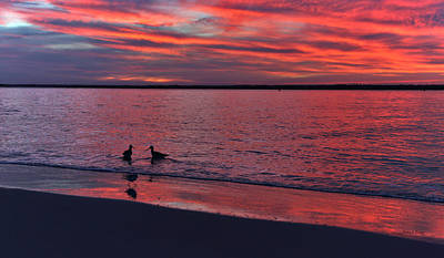 Topsail Photograph - I've Been Wading On You by Betsy Knapp