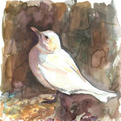Painting - Ivory Gull by Abby McBride