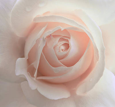 Ivory Peach Pastel Rose Flower Art Print by Jennie Marie Schell