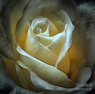 Ivory Rose - Eternal Art Print by Janine Riley