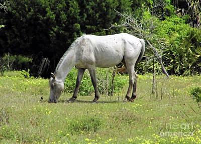 Photograph - Ivory Stallion by D Hackett
