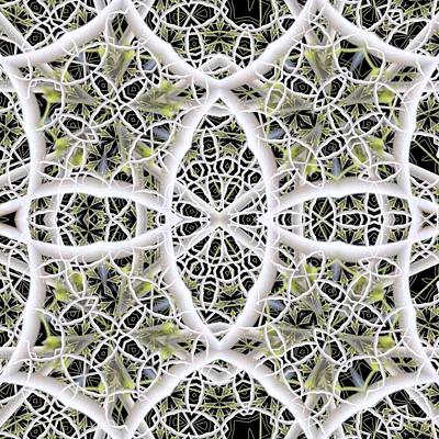 Digital Art - Ivory Web by Ron Bissett