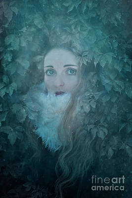 Photograph - IVY by Agnieszka Mlicka