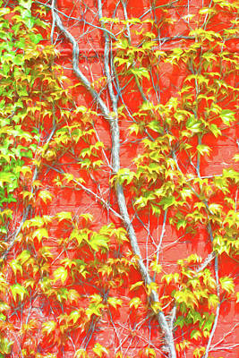 Photograph - Ivy And Red Brick 3 Sketch by Mary Bedy