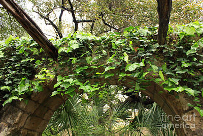 Photograph - Ivy-covered Arch At The Alamo by Carol Groenen
