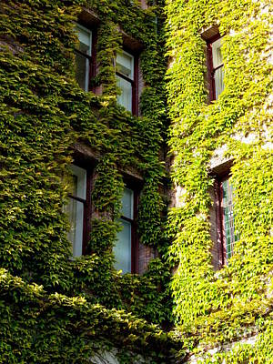 Photograph - Ivy-covered Corner by Carol Groenen