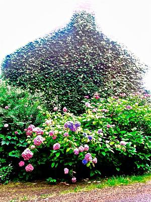 Photograph - Ivy Covered House With Flowers by Stephanie Moore