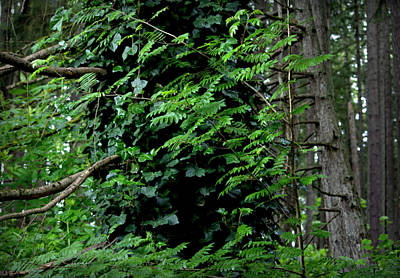 Photograph - Ivy Covered Tree In The Forest by Jeanette C Landstrom