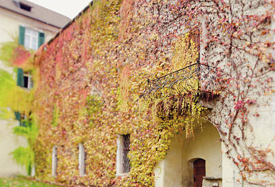 Ivy Covered Wall, Neustift Abbey, Bressanone Art Print by Margaret Goodwin
