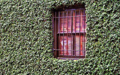 Photograph - Ivy Covering by JAMART Photography