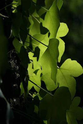 Arbres Verts Photograph - Ivy by Fabienne Veverka