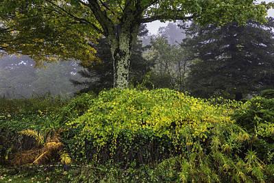 Photograph - Ivy Garden by Ken Barrett