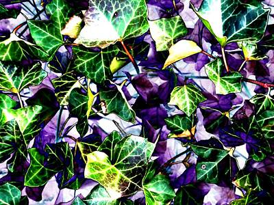 Photograph - Ivy In Abstract by Beth Akerman