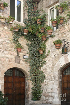 Photograph - Ivy In Assisi by Stan and Anne Foster