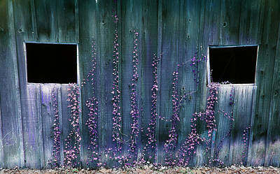 Photograph - Ivy On The Barn by Mike Eingle