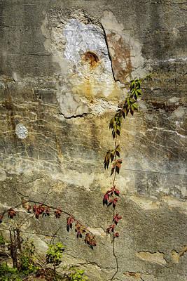 Photograph - Ivy On The Wall by LeeAnn McLaneGoetz McLaneGoetzStudioLLCcom