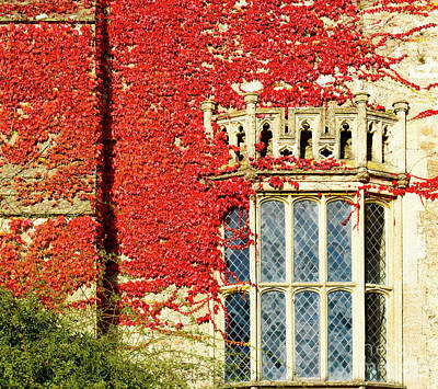 Photograph - Ivy On Wall by Colin Rayner