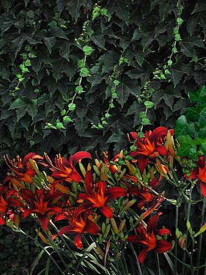 Ivy Over Art Print by Richard Gordon