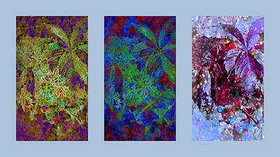 Photograph - Ivy Perspectives Triptych Style by Dorothy Berry-Lound