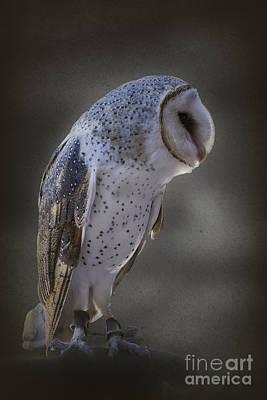 Photograph - Ivy The Barn Owl by Elaine Teague