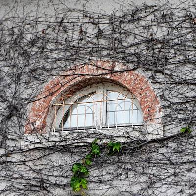Photograph - Ivy Window by Cheryl Miller