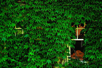 Photograph - Ivy Window by Harry Spitz