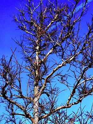 Photograph - J Q P Tree 1 by Nik Watt