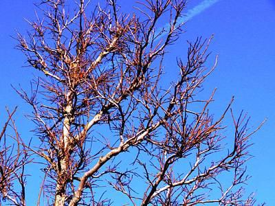 Photograph - J Q P Tree 2 by Nik Watt