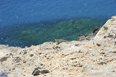 Cape Look Out Photograph - Jabba The Cypriot  by Clay Cofer