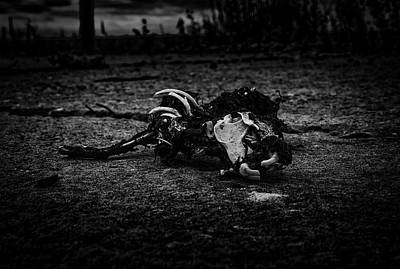 Jabberwocky Photograph - Jabberwocky. An Eerie And Dark Fine Art Photographic Print Of The Skeletal Remains Of A Beastie  by Lee Thornberry