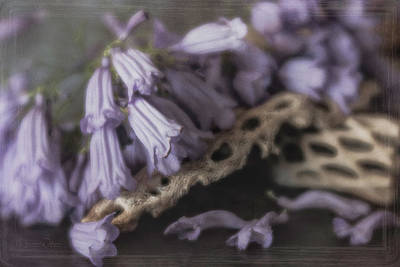 Photograph - Jacaranda And Cholla Wood by Teresa Wilson