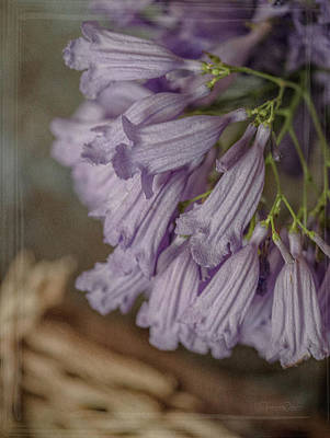 Photograph - Jacaranda And Cholla Wood Vertical by Teresa Wilson