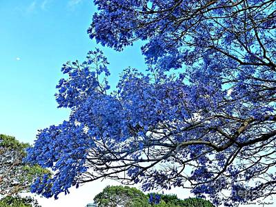 Photograph - Jacaranda And The Moon by Leanne Seymour