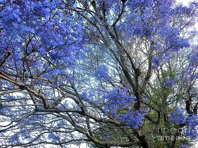 Mixed Media - Jacaranda Living The Dream by Leanne Seymour