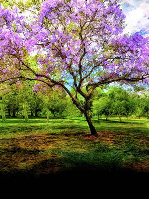 Mixed Media - Jacaranda Tree by Joseph Hollingsworth