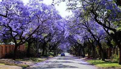Jacaranda Tree Photograph - Jacarandas In Pretoria by Lene Pieters