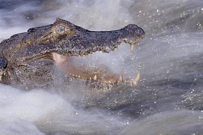 Photograph - Jacare Caiman Fishing by Tui De Roy