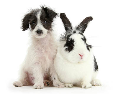 Photograph - Jack-a-poo And Jack Rabbit by Warren Photographic