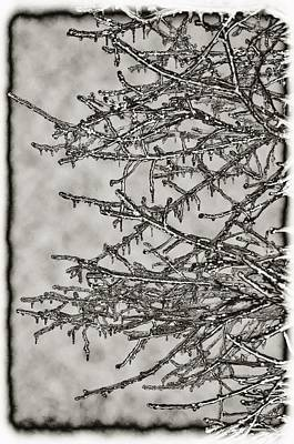 Jack Frost Print by Bill Cannon