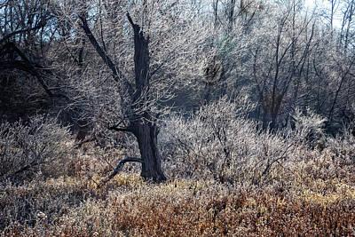 Photograph - Jack Frost by Debra and Dave Vanderlaan