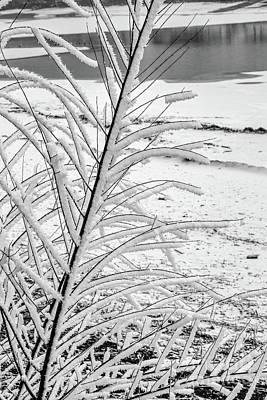 Photograph - Jack Frost by Jon Burch Photography