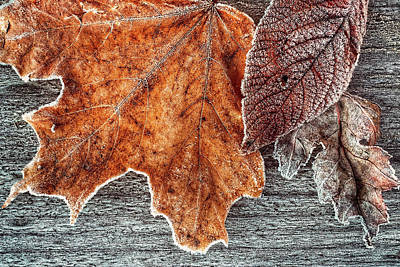 Photograph - Jack Frost's Touch by Jill Love