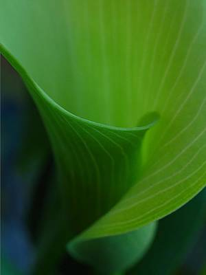 Rose Photograph - Jack In A Pulpit by Juergen Roth