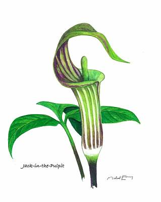 Painting - Jack-in-the-pulpit - Arisaema Triphyllum by Michael Earney