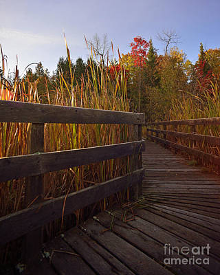 Photograph - Jack Pine Trail by Joshua McCullough