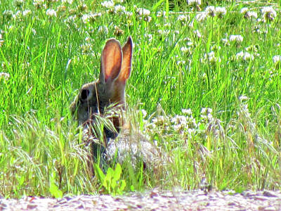 Photograph - Jack Rabbit - Easter Bunny by Marie Jamieson